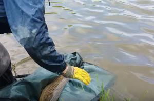 pesca delle carpa La Vasca di Cigognola