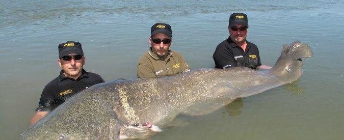 pesca del pesce siluro nel lago Maggiore